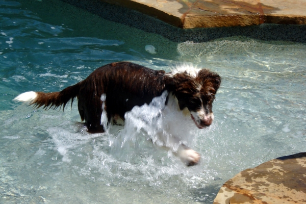 Lucky Dog Pool
